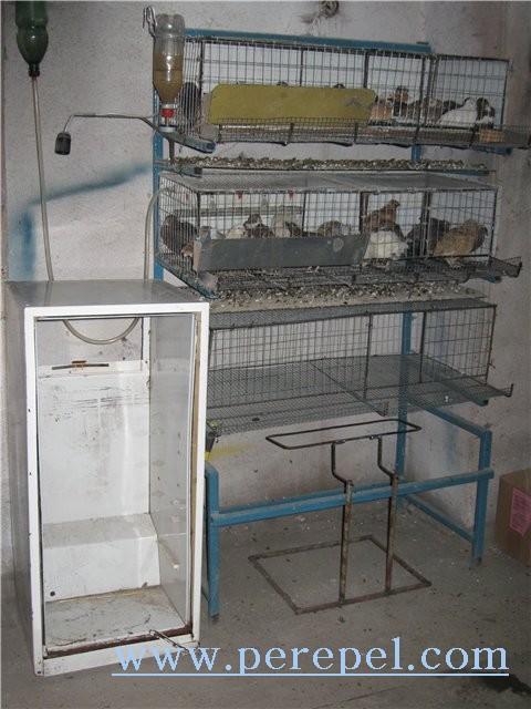 Инкубатор для яиц своими руками для попугаев 14